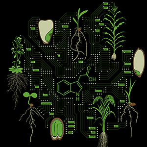 Auxin Motherboard