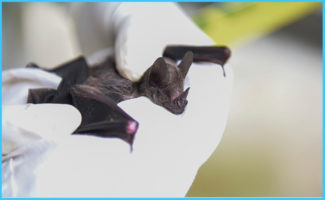 Coronavirus Outbreak Raises Questions: Why are Bat Viruses so Deadly?