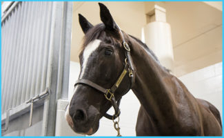 MU College of Veterinary Medicine Helps Athletic Horse Recover From Irregular Heartbeat